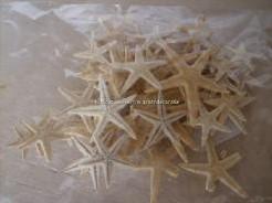 Zeesterren klein 1-2 inch, 100 stuks